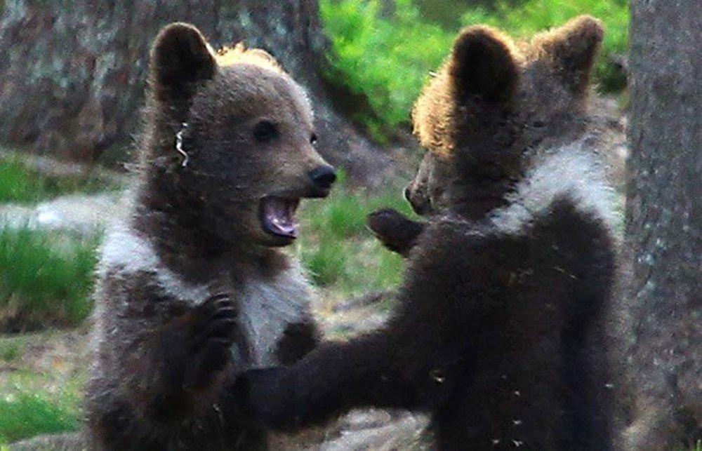 Image result for медвежата в лесу