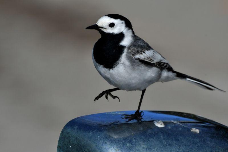 Kars'ta canlanan doğa kuşlarla şenlendi - Sayfa 1