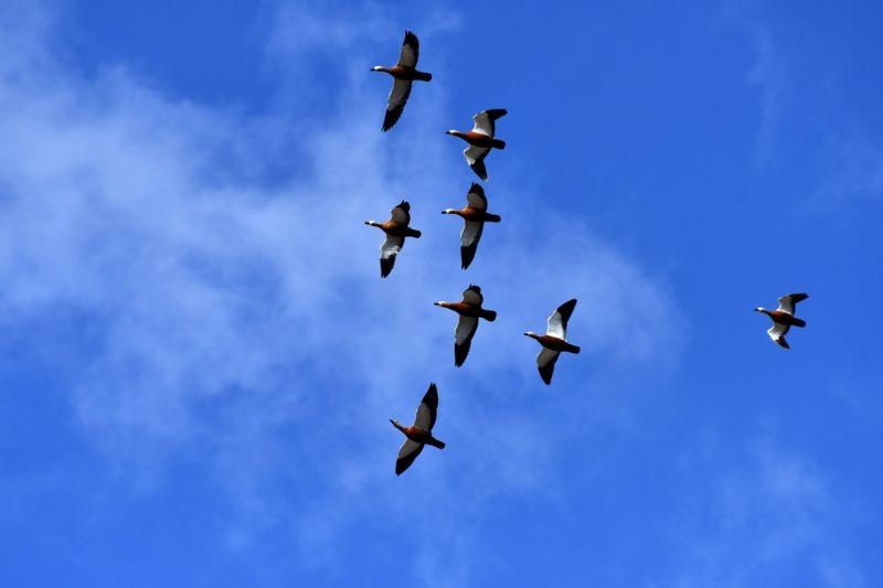 Kars'ta canlanan doğa kuşlarla şenlendi - Sayfa 3