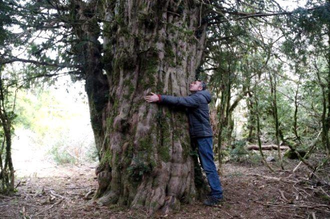 Yolunu kaybeden fotoğrafçılar tarafından bulunan 2 bin 500 yıllık ağaç ihtişamıyla büyüledi - Sayfa 4