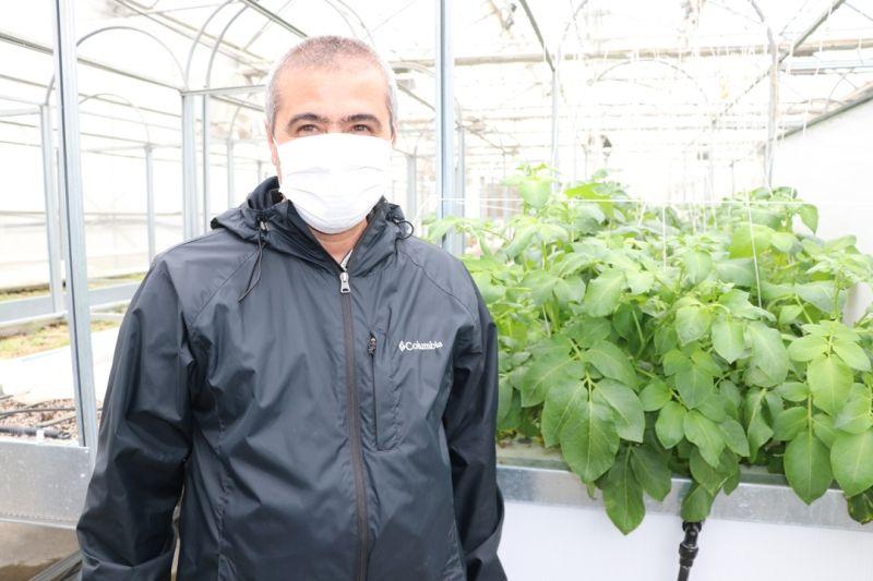 Topraksız tarımla patatesin toprak altındaki unsurlarının genetiği çıkartılıyor - Sayfa 4