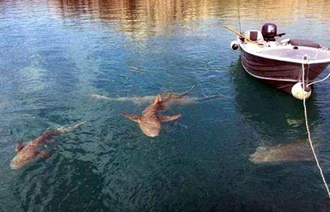 En ölümcül avcıların karşılaşmasında beklenmedik son! - Sayfa 3