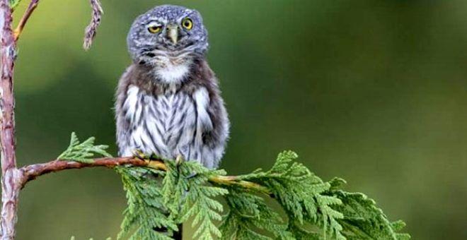 Bu fotoğrafa bakan tebessümünü gizleyemiyor! İşte en komik doğa fotoğrafları - Sayfa 1