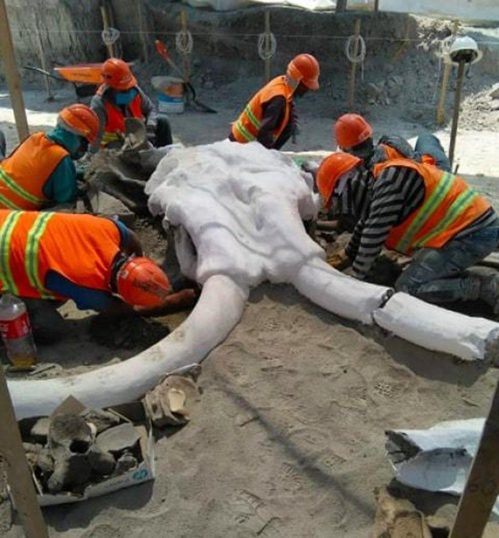 Meksika'da havalimanı inşaatında 15 bin yıllık mamut kemikleri bulundu - Sayfa 1