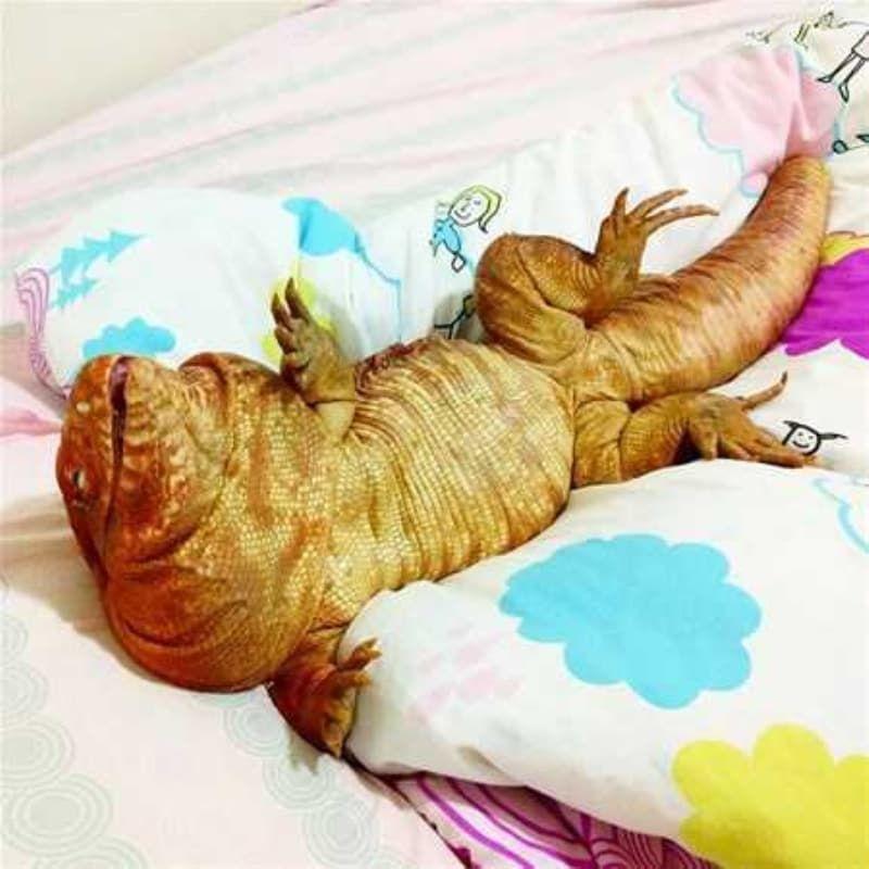 Dünyanın yaşayan en büyük canlıları - Sayfa 2