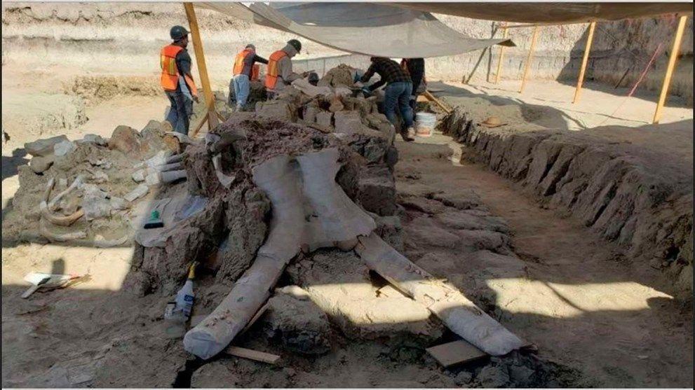 Meksika'da havalimanı inşaatında 15 bin yıllık mamut kemikleri bulundu - Sayfa 2