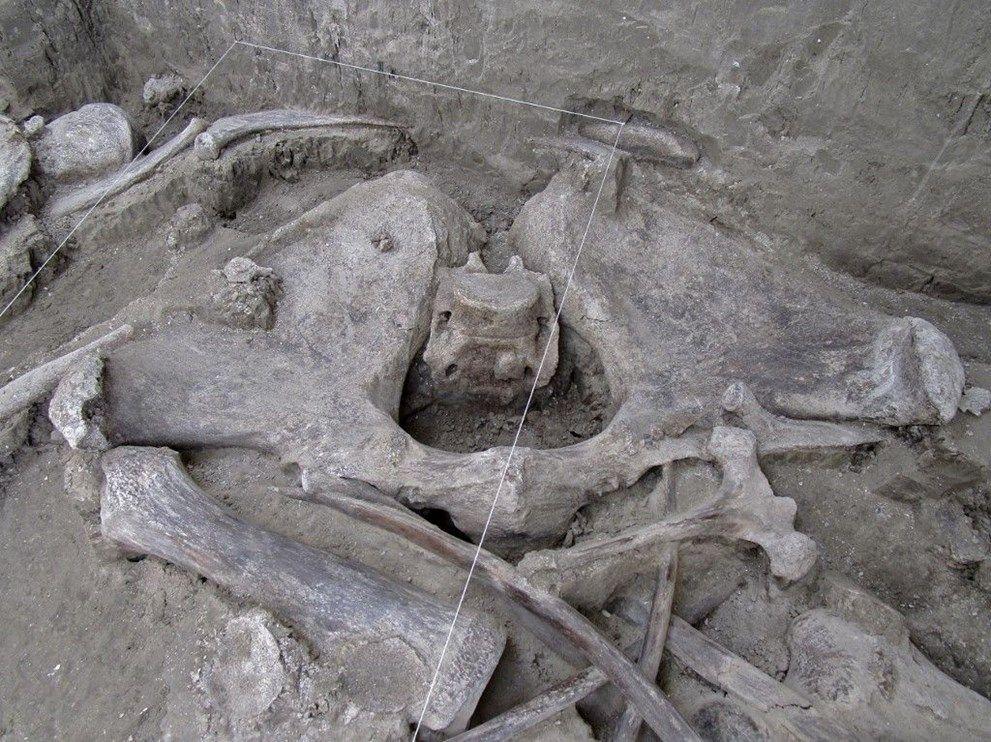 Meksika'da havalimanı inşaatında 15 bin yıllık mamut kemikleri bulundu - Sayfa 4