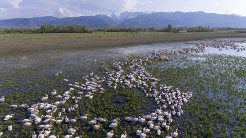 Kışı Eber Gölü'nde geçiren flamingolar güzellikleriyle ilgi çekiyor - Sayfa 3