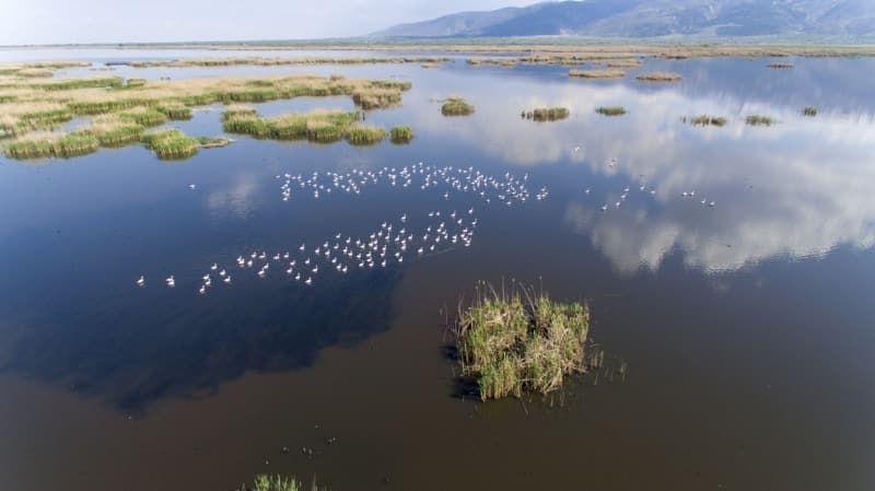 Kışı Eber Gölü'nde geçiren flamingolar güzellikleriyle ilgi çekiyor - Sayfa 4