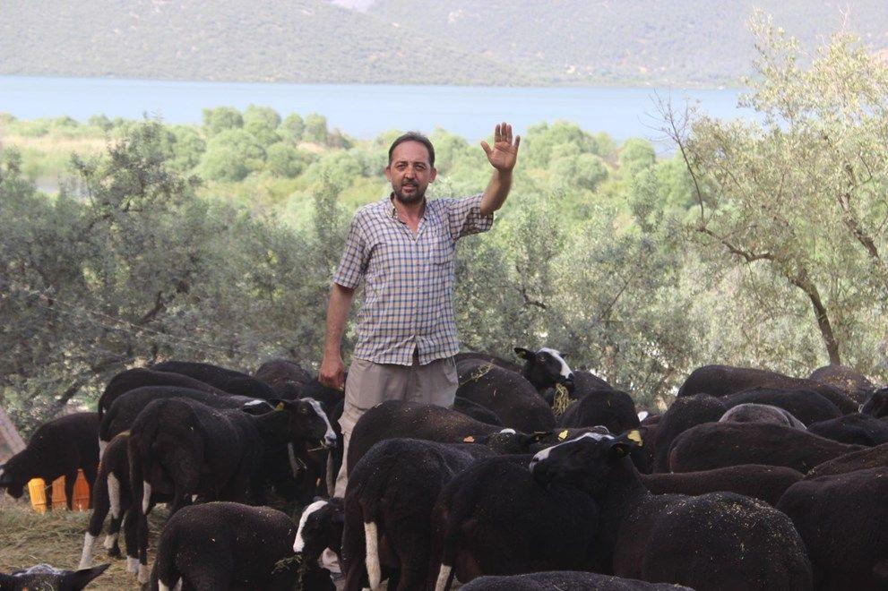 Bu koyunu almak isteyenler 5 ay beklemek zorunda kalıyorlar. - Sayfa 4