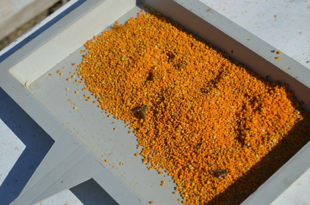 Siirt'te köylülerin yeni gelir kaynağı olan polen hasadına başlandı - Sayfa 1