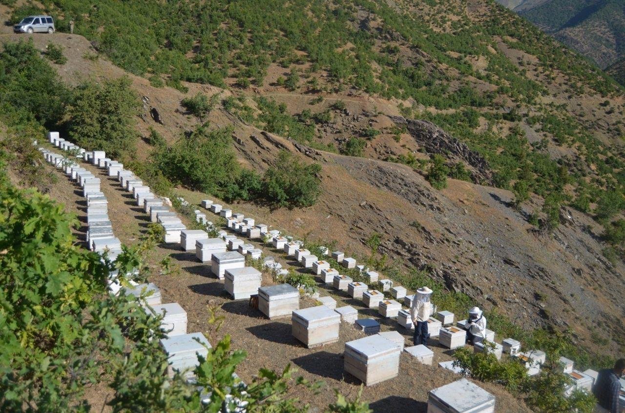 Siirt'te köylülerin yeni gelir kaynağı olan polen hasadına başlandı - Sayfa 3