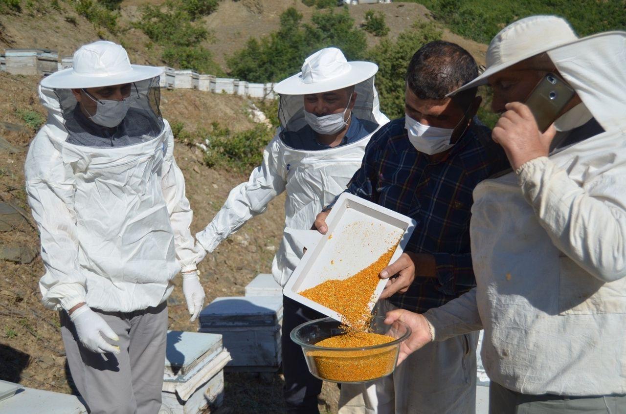 Siirt'te köylülerin yeni gelir kaynağı olan polen hasadına başlandı - Sayfa 4