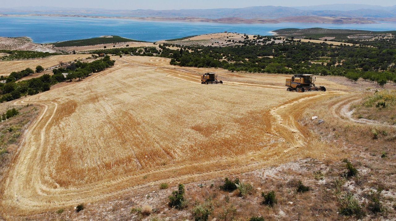 Elazığ'da 600 dönüme arpa eken başkan, hasada başladı - Sayfa 2