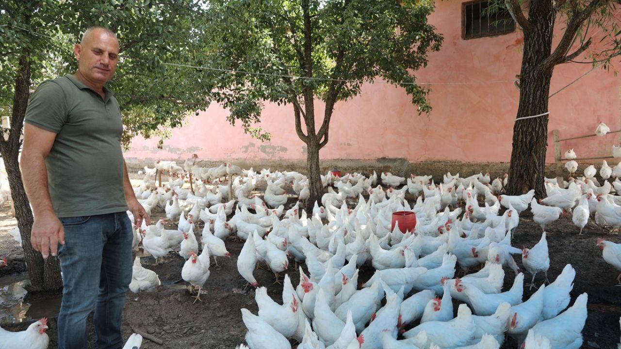 Bahçesinde binlerce tavuk yetiştiriyor - Sayfa 1