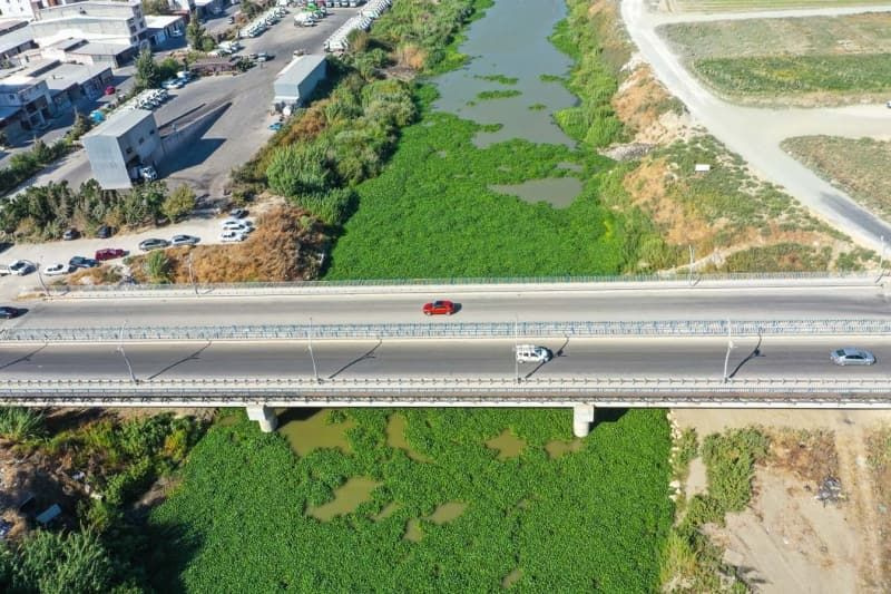 Su sümbülleri Asi Nehri'nde yeniden görülmeye başladı - Sayfa 4
