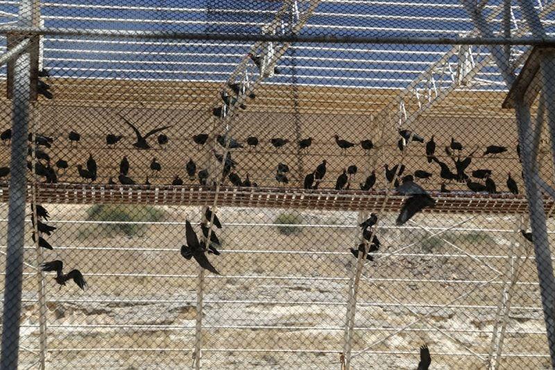 Şanlıurfa'da kelaynakların korunması için başlatılan proje başarılı oldu - Sayfa 2