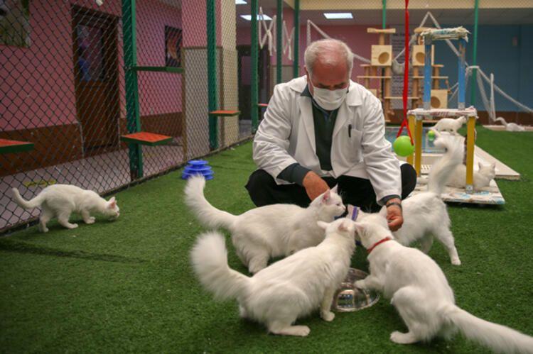 Salgın sürecinde Van kedileri uzaktan seviliyor - Sayfa 4