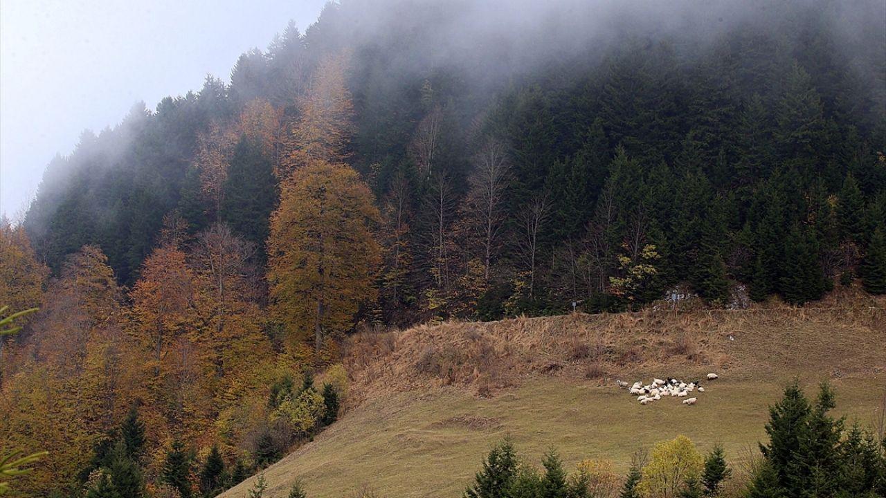Tarihi İpek Yolu'nda sonbahar güzelliği - Sayfa 2