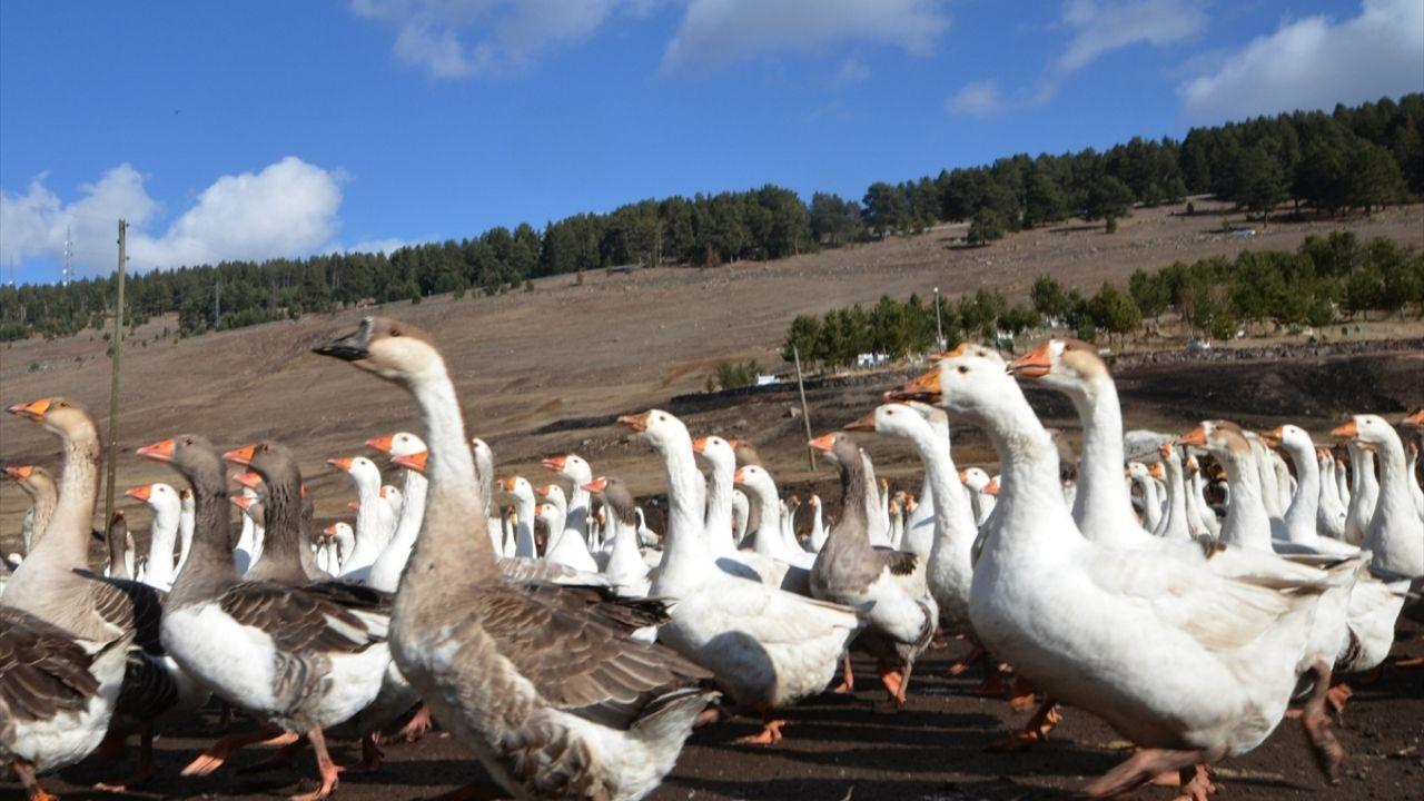 Hobi için kurduğu çiftlikte yetiştirdiği kazları Türkiye'nin dört bir yanına gönderiyor - Sayfa 3