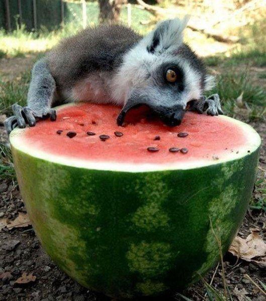 Yemek yiyen hayvanların komik halleri - Sayfa 4