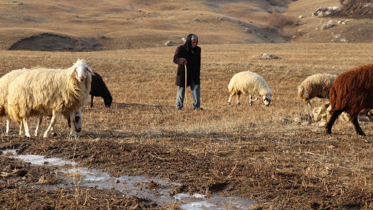 Yılın yarısını koyunlarıyla kırsalda yalnız geçiriyor - Sayfa 1