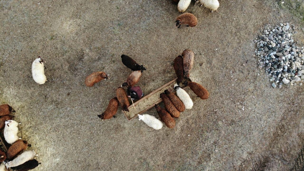 Yılın yarısını koyunlarıyla kırsalda yalnız geçiriyor - Sayfa 2