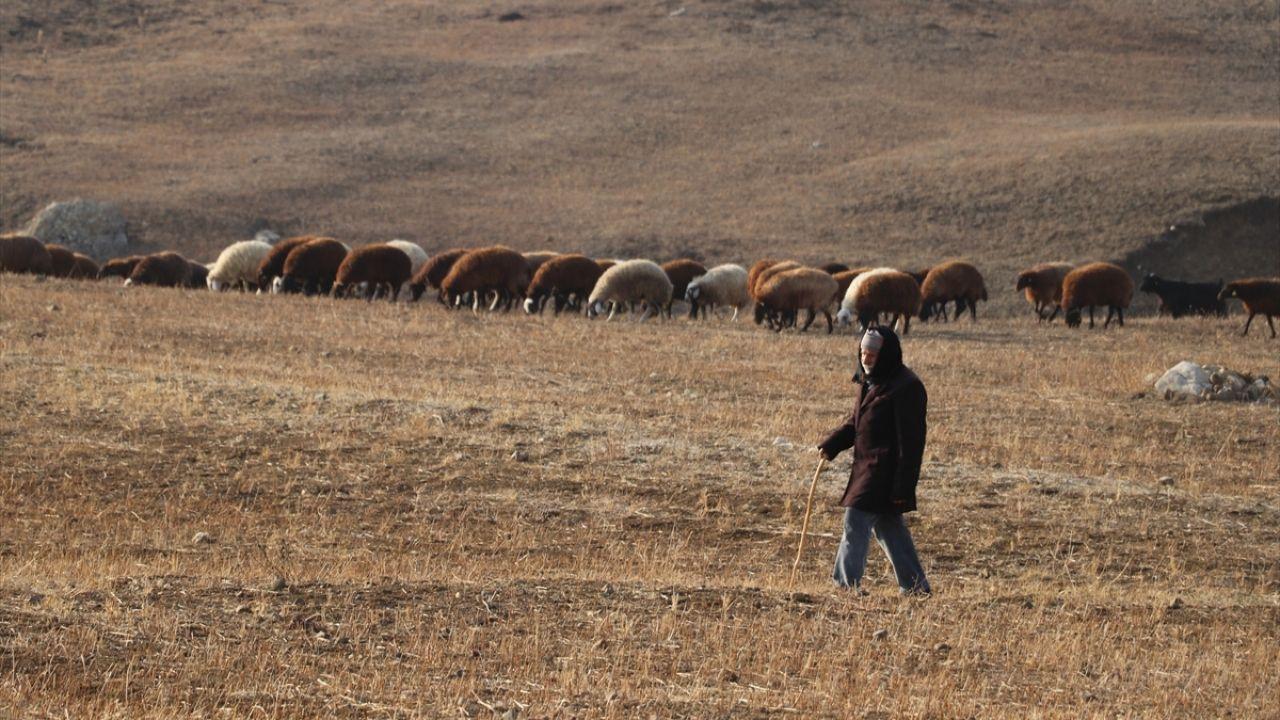 Yılın yarısını koyunlarıyla kırsalda yalnız geçiriyor - Sayfa 3