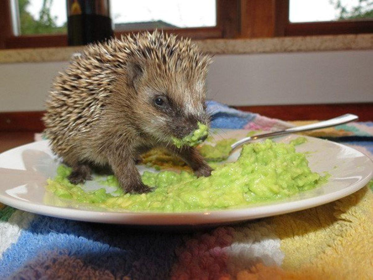 Yemek yiyen hayvanların komik halleri - Sayfa 1
