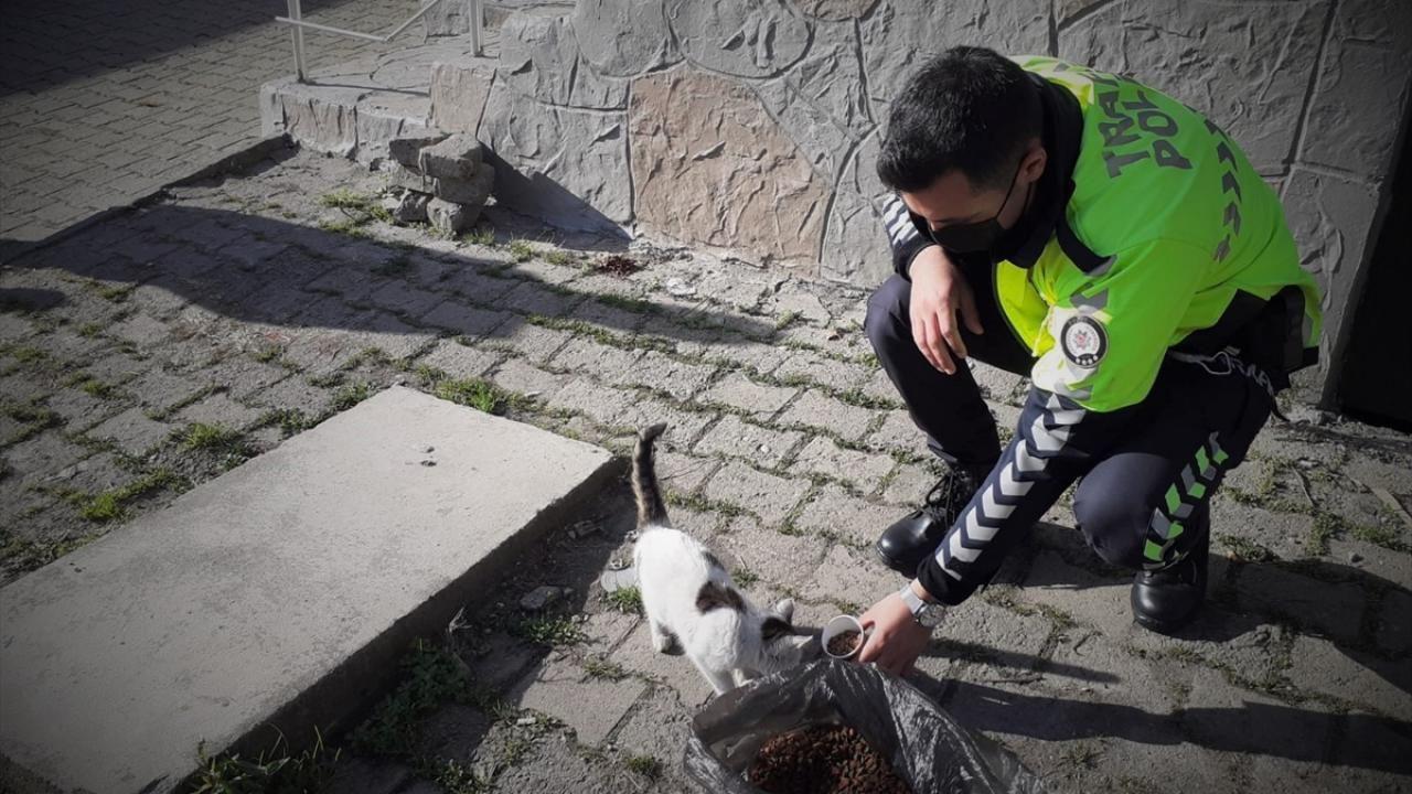 Kısıtlamada sokak hayvanları unutulmadı - Sayfa 4
