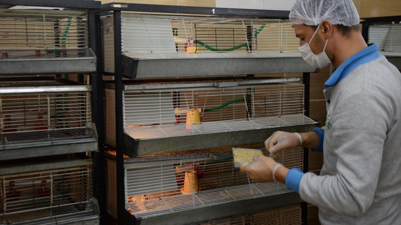 Kahramanmaraş'ta 2020 yılında 15 bin kınalı keklik yetiştirildi - Sayfa 2