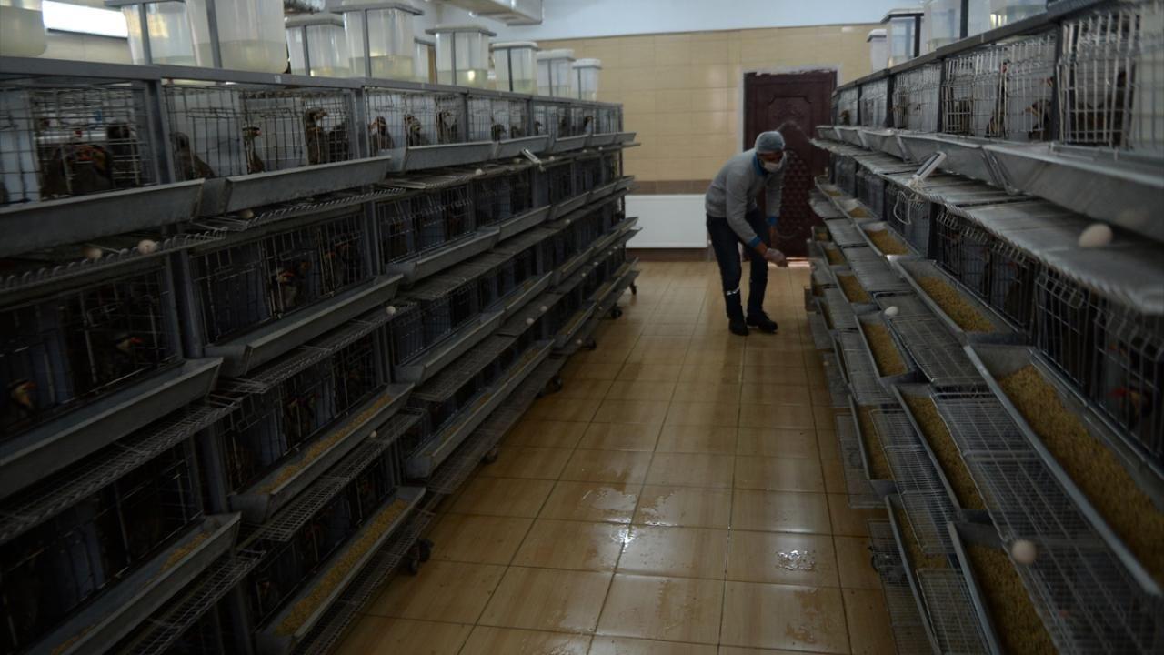 Kahramanmaraş'ta 2020 yılında 15 bin kınalı keklik yetiştirildi - Sayfa 3