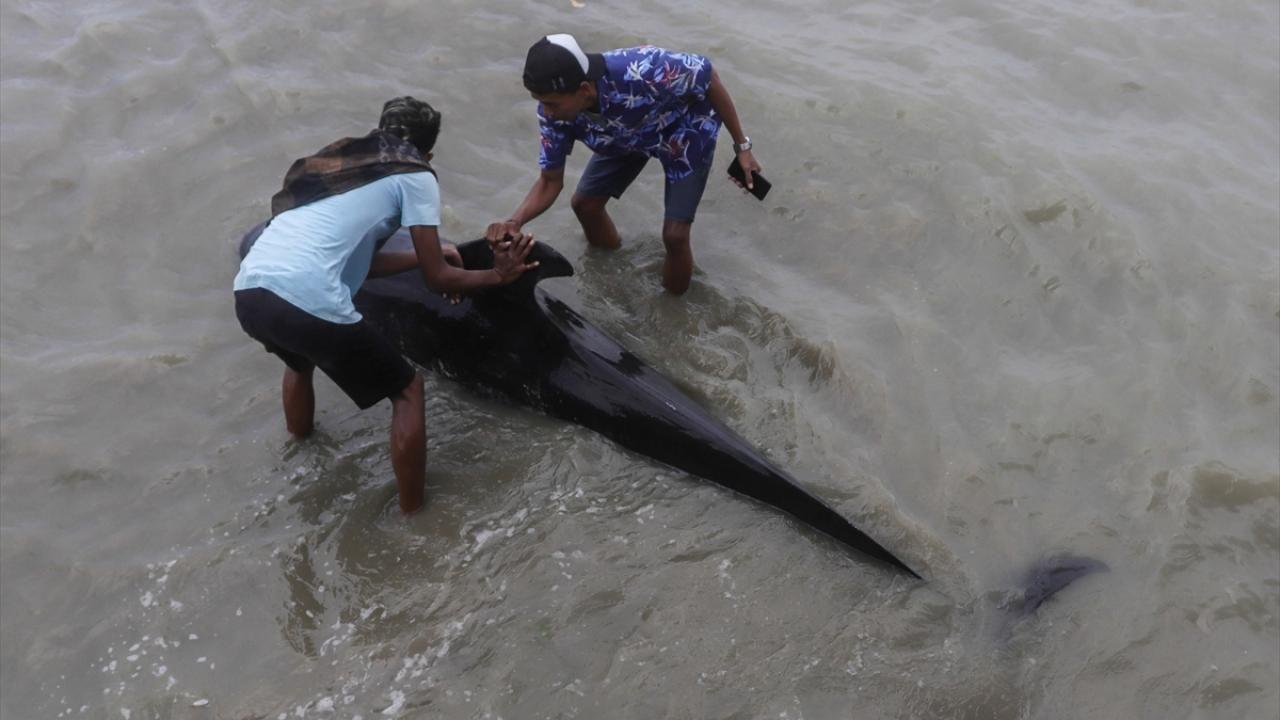 Endonezya'da pilot balinalar kıyıya vurdu - Sayfa 1