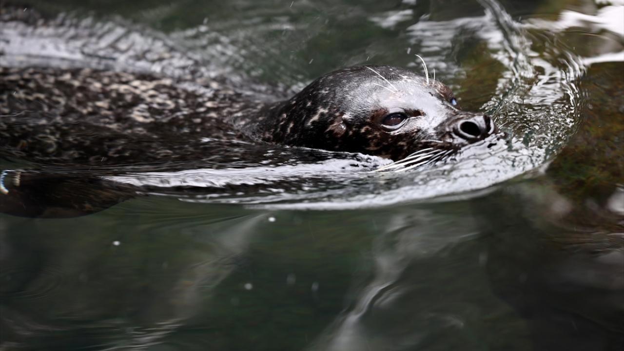 Central Park Hayvanat Bahçesi kar altında - Sayfa 2