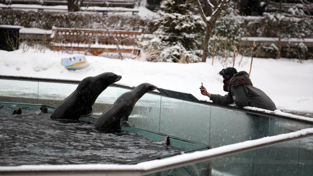 Central Park Hayvanat Bahçesi kar altında - Sayfa 3