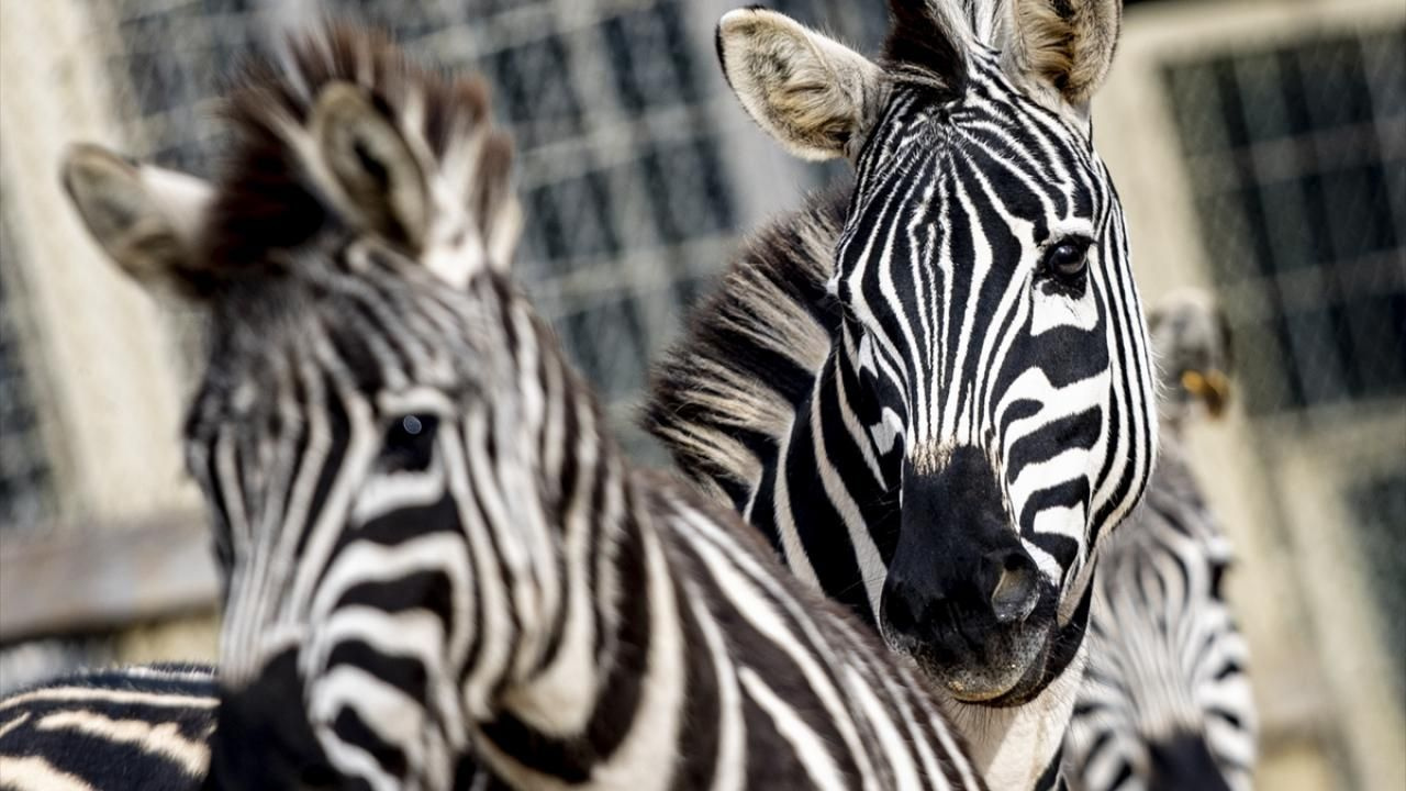 Antalya Hayvanat Bahçesi ziyaretçilerini bekliyor - Sayfa 1