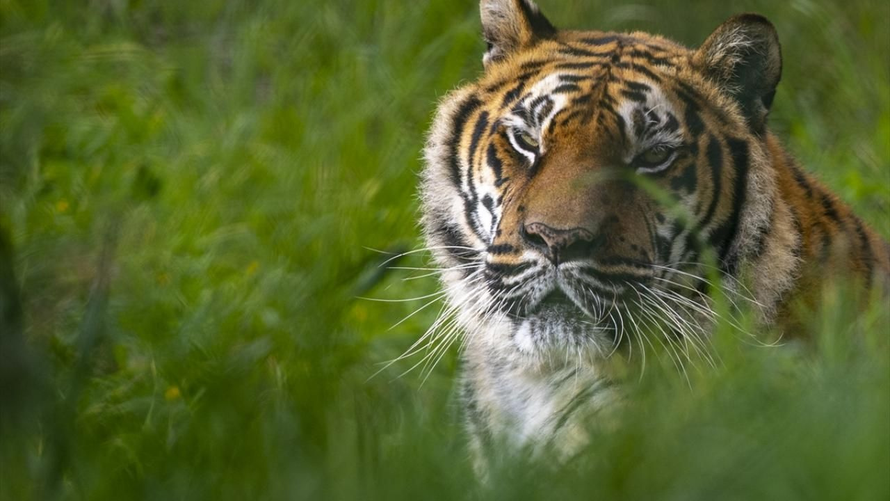 Antalya Hayvanat Bahçesi ziyaretçilerini bekliyor - Sayfa 2