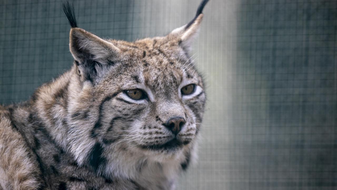 Antalya Hayvanat Bahçesi ziyaretçilerini bekliyor - Sayfa 4