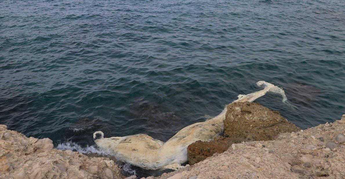 12 metrelik ölü balina yavrusu kıyıya vurdu - Sayfa 2