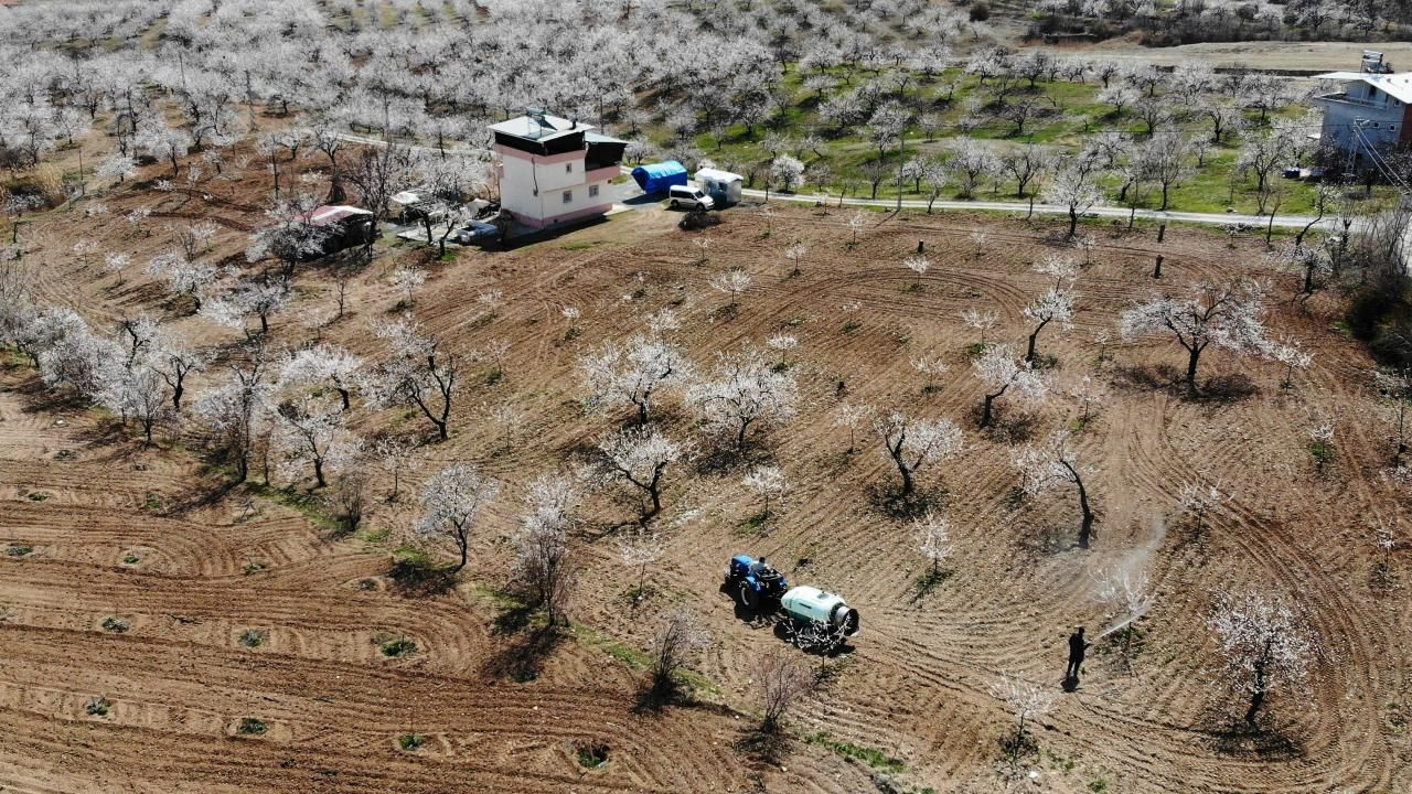 Malatya'da kayısı ağaçları çiçek açtı - Sayfa 3