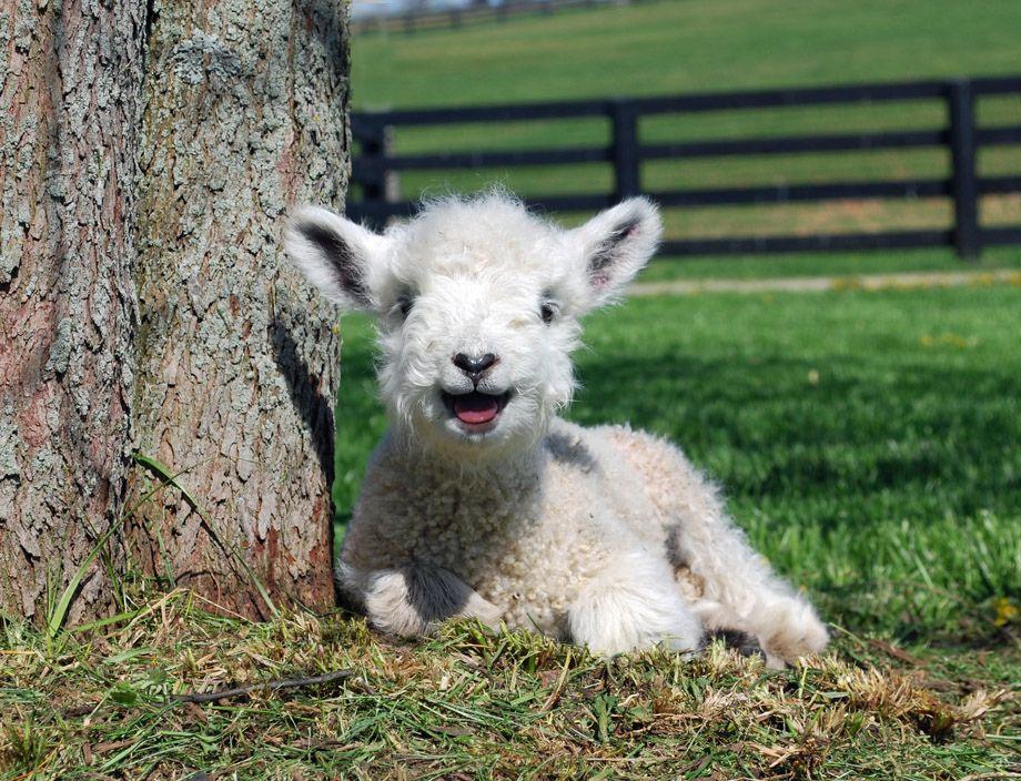 Dünyanın en mutlu hayvanlarının gülümsediği anlar - Sayfa 1