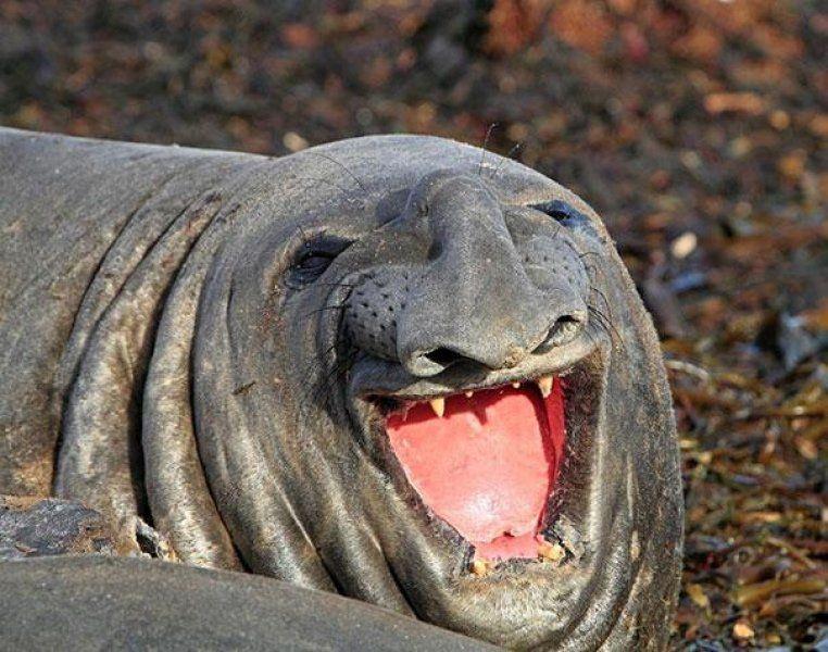 Dünyanın en mutlu hayvanlarının gülümsediği anlar - Sayfa 4