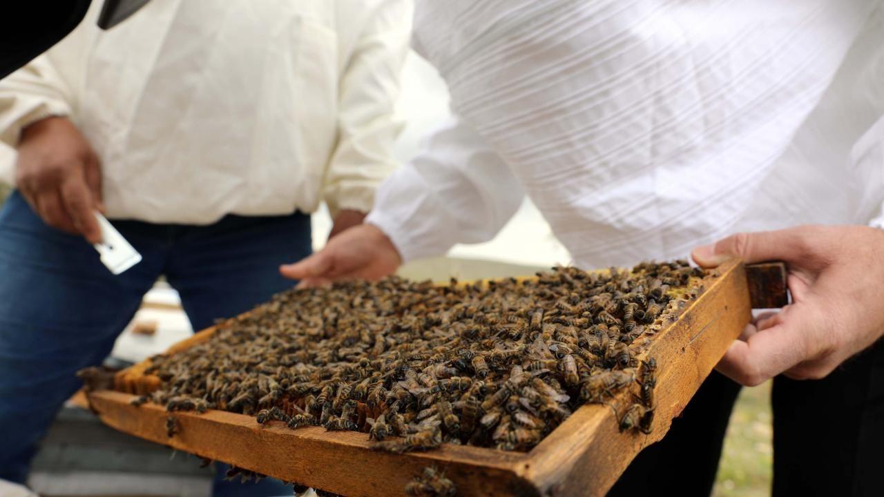 Gaziantep Arı Yetiştiricileri Birliği: Hedefimiz 500 ton bal üretmek - Sayfa 4