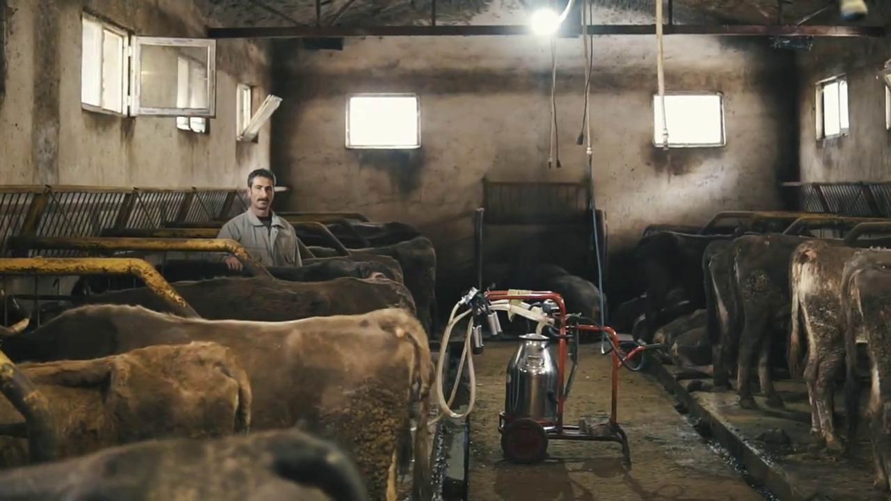 'Soğuk Zincir Süt Projesi' sayesinde üreticilerin yüzü güldü - Sayfa 1