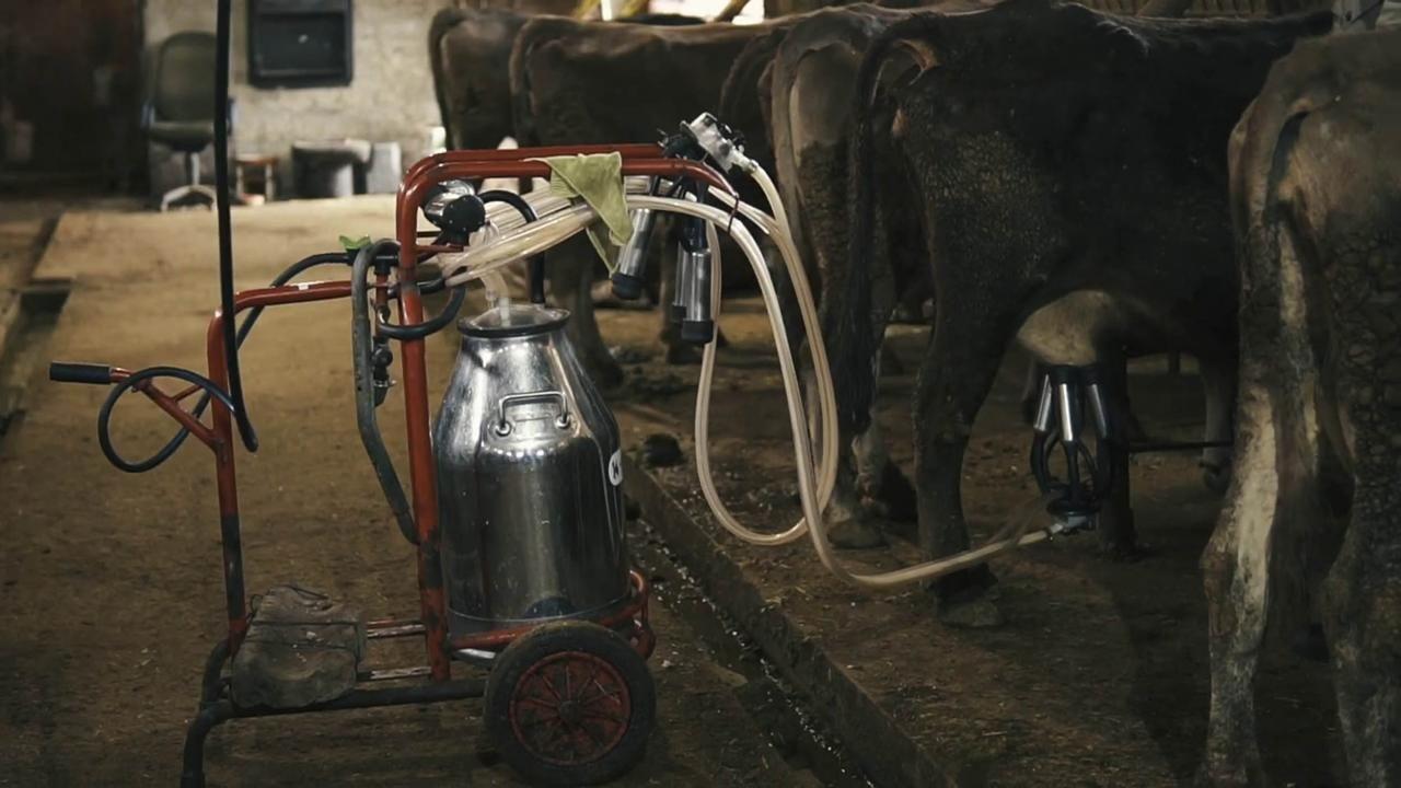 'Soğuk Zincir Süt Projesi' sayesinde üreticilerin yüzü güldü - Sayfa 2