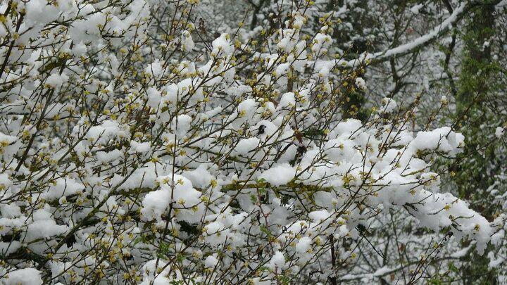 Nisan ayında kar sürprizi - Sayfa 3