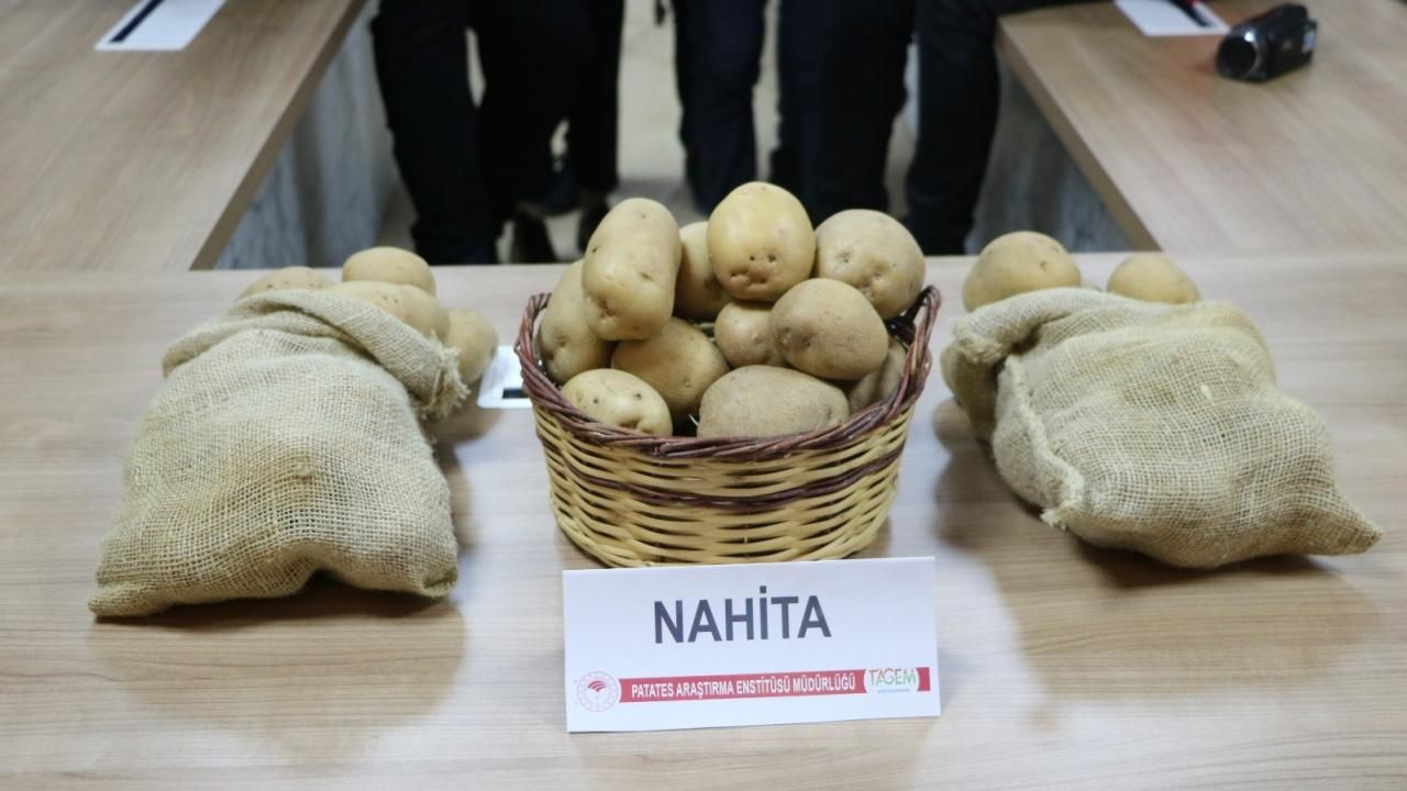 Yerli patates çeşidi 'Nahita' Avrupa yolunda - Sayfa 1