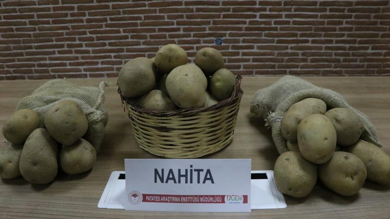 Yerli patates çeşidi 'Nahita' Avrupa yolunda - Sayfa 3