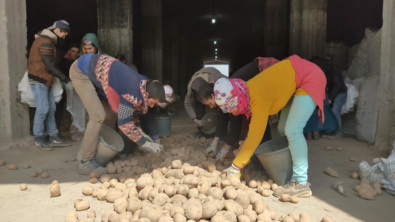 Cumhurbaşkanı Erdoğan'ın müjdesi Ahlatlı patates üreticilerini sevindirdi - Sayfa 2