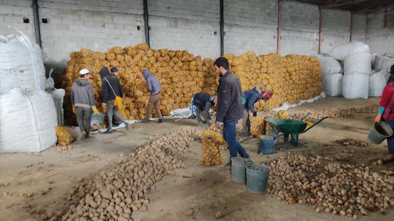 Cumhurbaşkanı Erdoğan'ın müjdesi Ahlatlı patates üreticilerini sevindirdi - Sayfa 4
